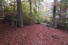 Spazierweg am Hochwald - Neu aufbereitet